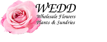 Wedd Wholesale Florist